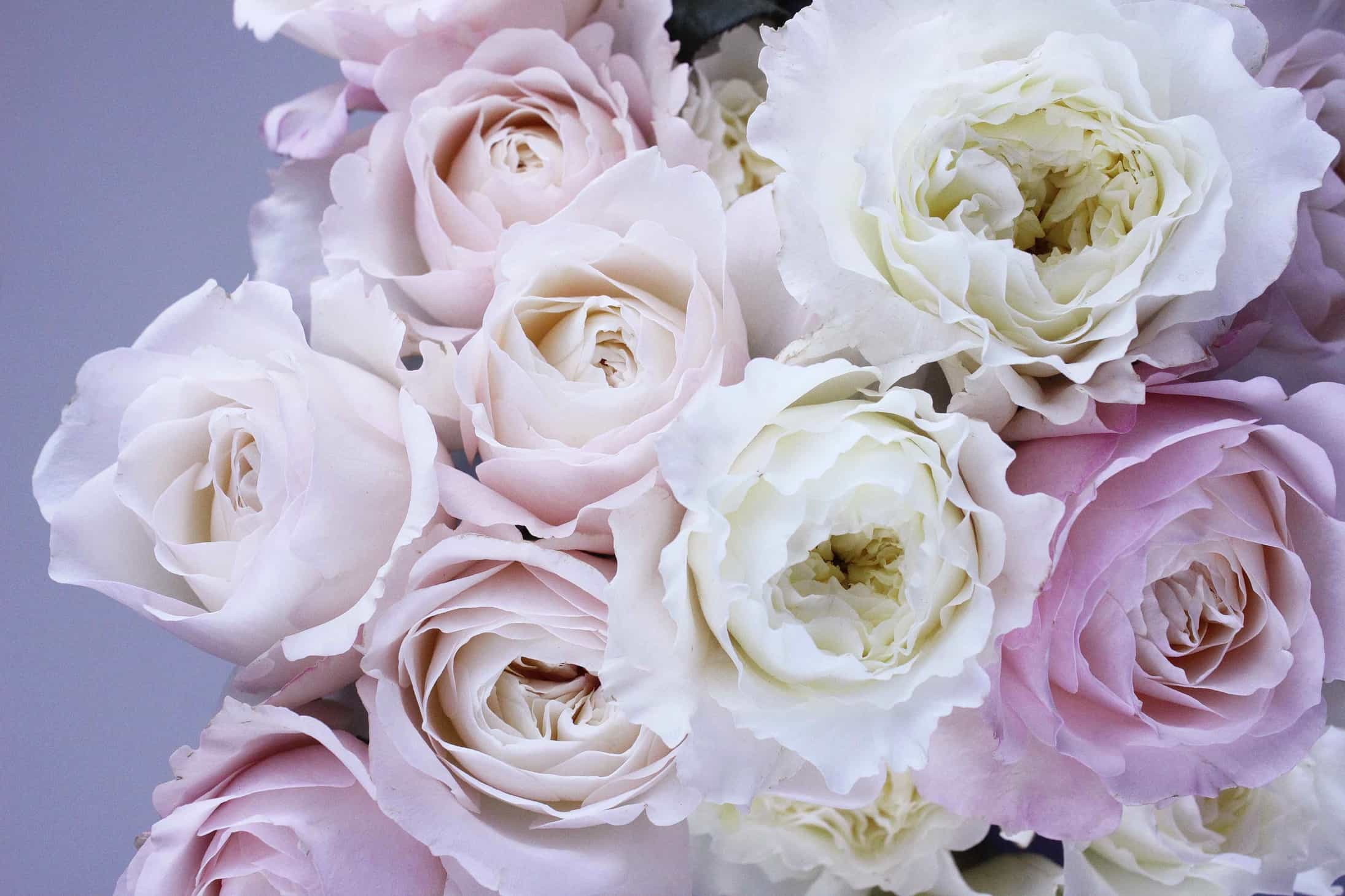cut garden roses, david austin roses, english roses, why garden roses so expensive