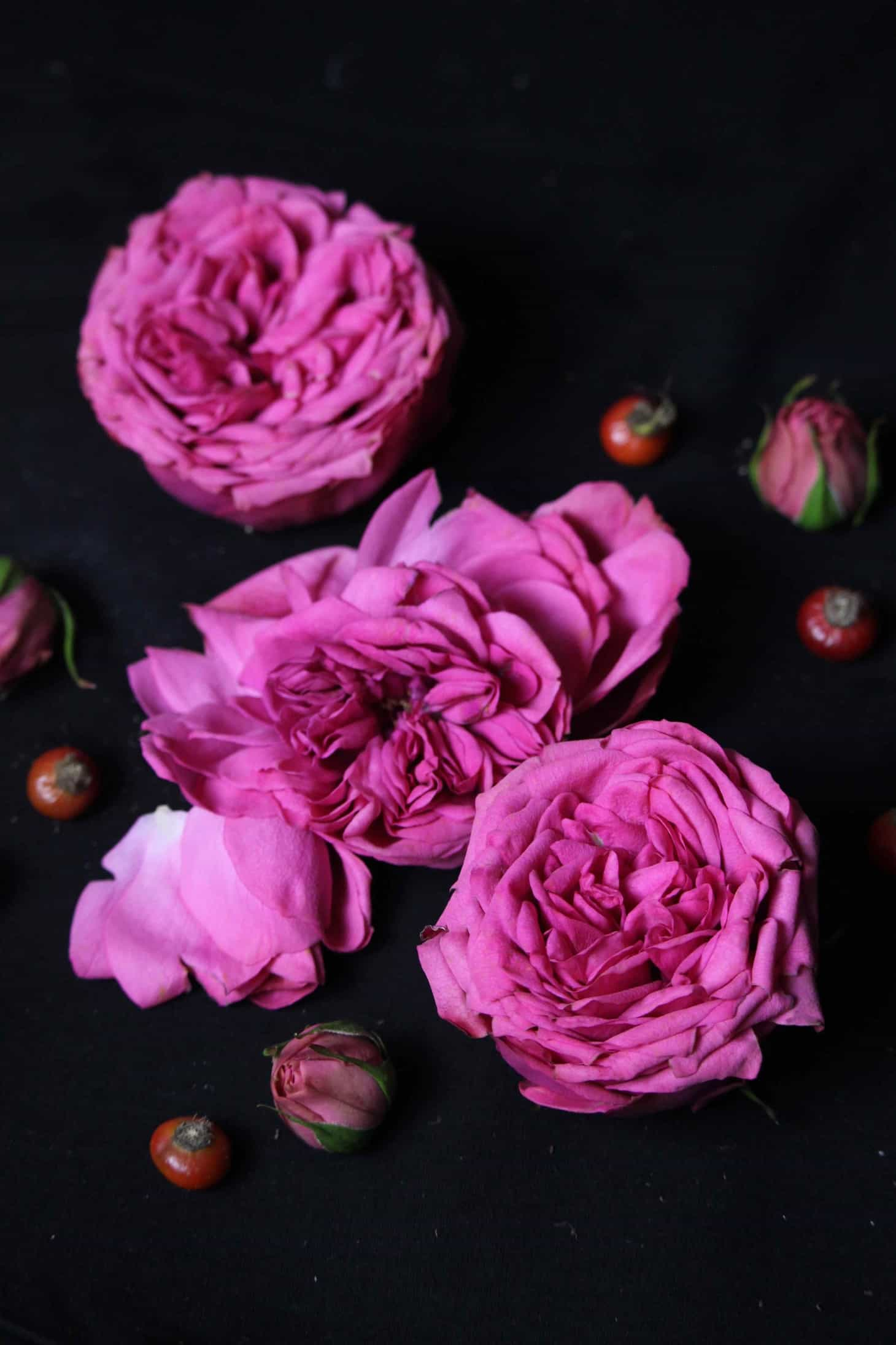 Photographing flowers against a black background, flowers on black, moody flowers, black background photography, How to Photograph Flowers with a Black Background, black background for floral macro, black background photography, black backdrop, photography black background, photo black background, roses on black background