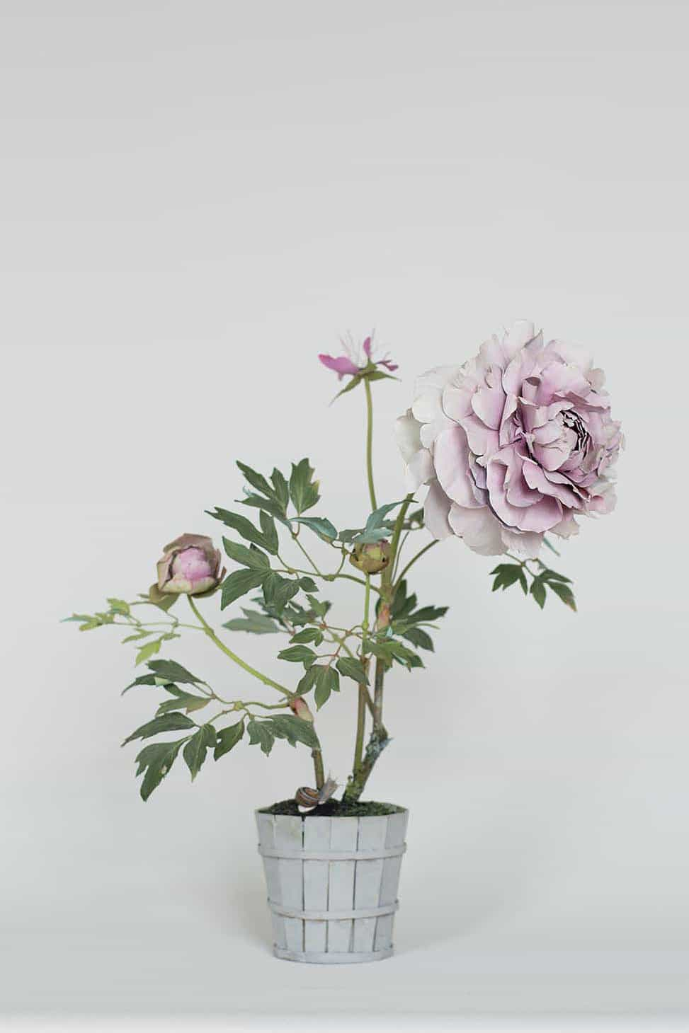 Botanical structures by Carmen Almon, peony, pink peony