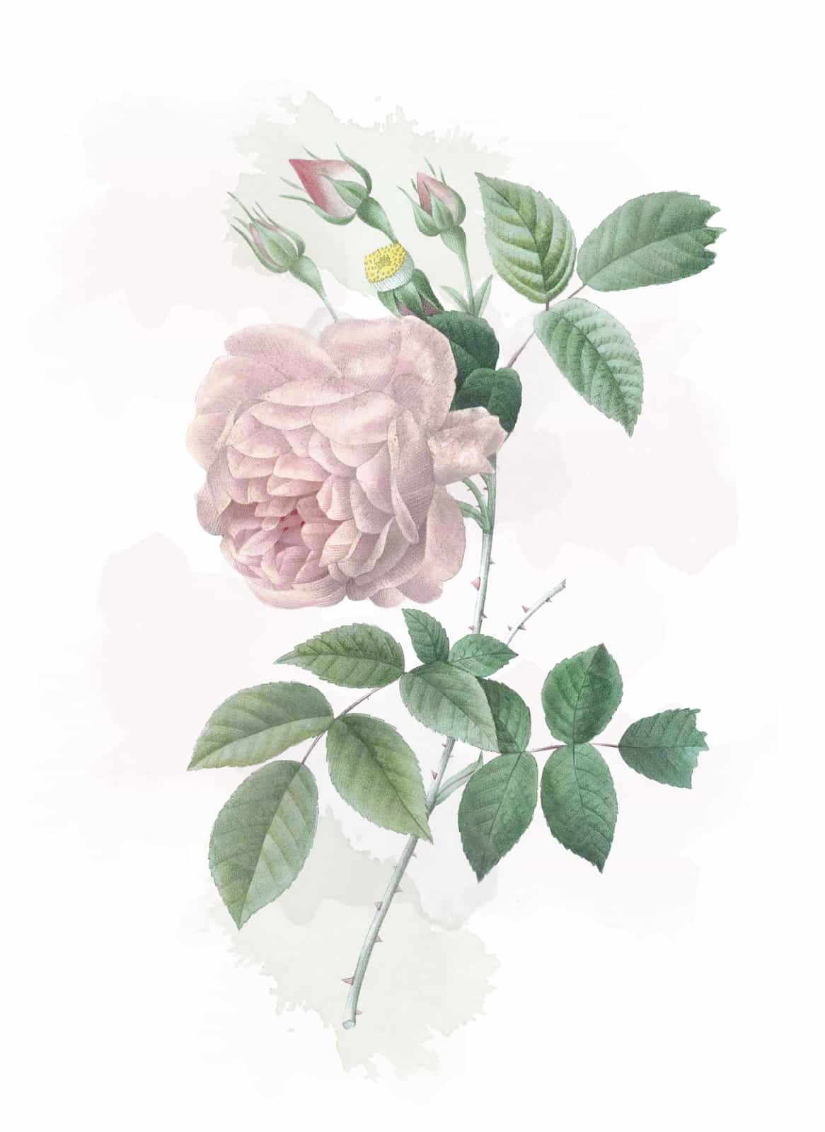 Victorian flowers and their meaning,  meaning of flowers, the language of flowers,  flower language meanings