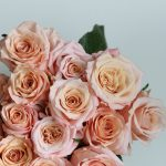 Rose Shimmer a perfect blend of elegance and durability