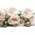 Rose quicksand the most elegant beige rose