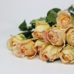 Caramel Antike is a rose of delicate beauty