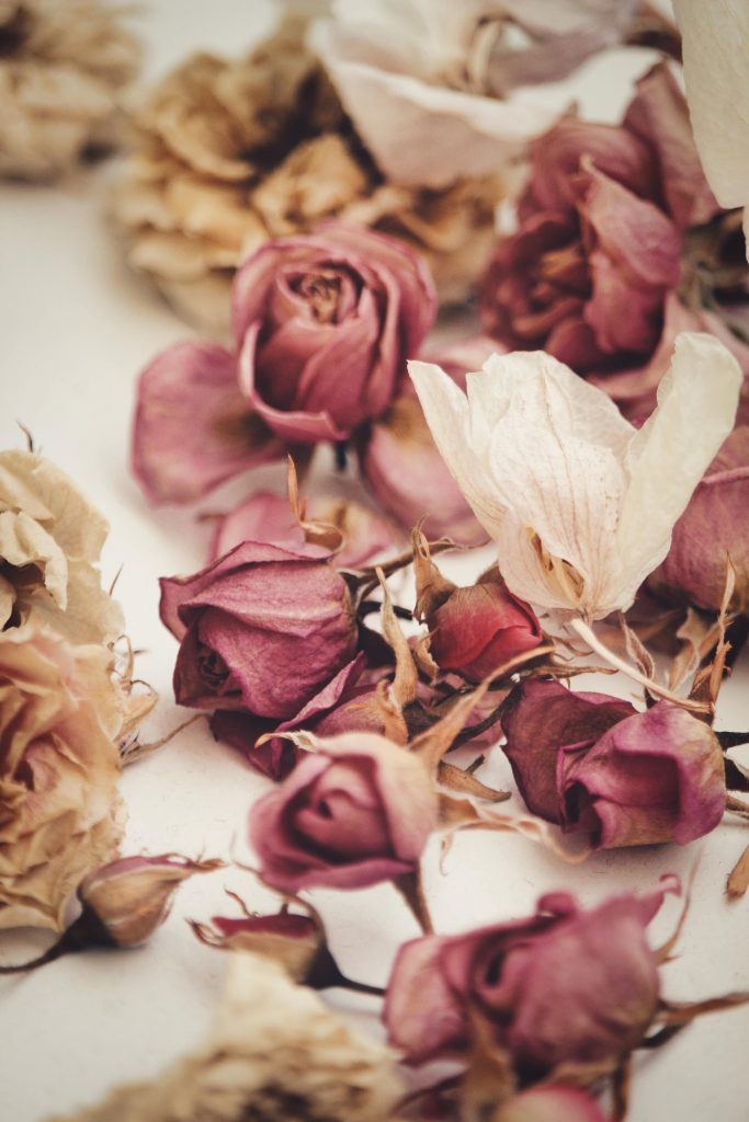 how to dry roses, ways to dry roses, preserving roses, how to dry flowers, dry roses, dried roses on white background