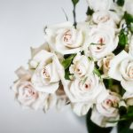 The Scent of Roses, Past and Present
