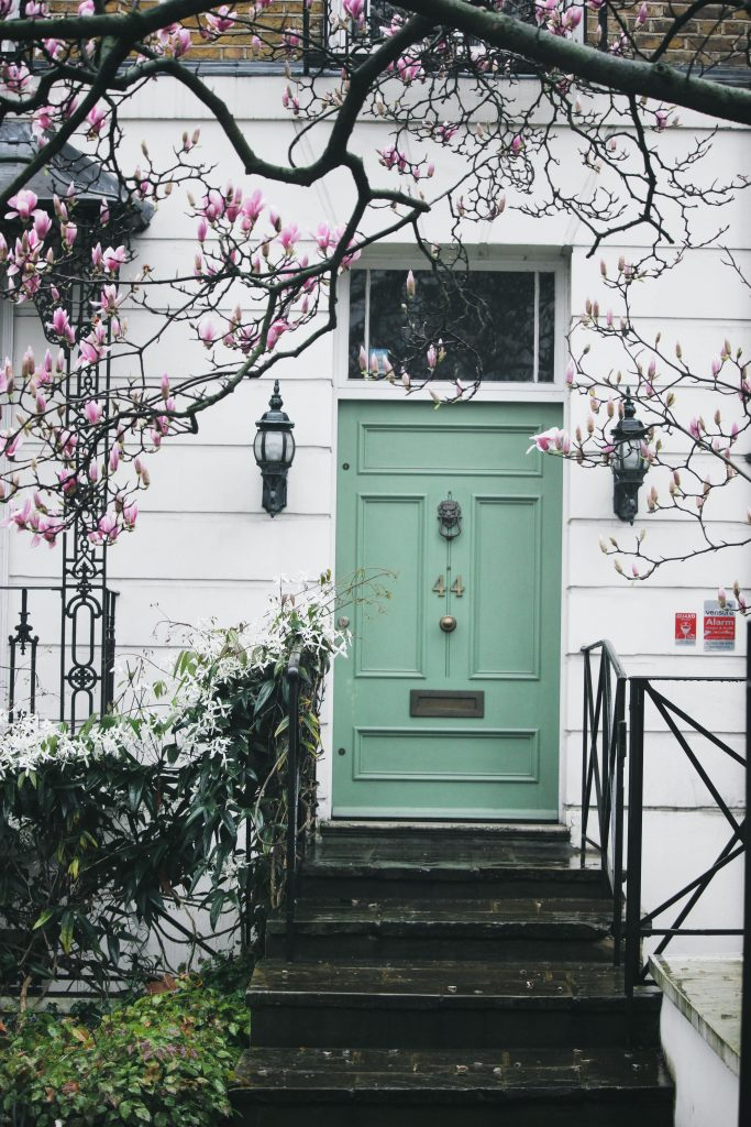 magnolia blossom in London, magnolia blossom in Notting Hill, magnolia Photography, pink magnolia, magnolia tree, green door and magnolia